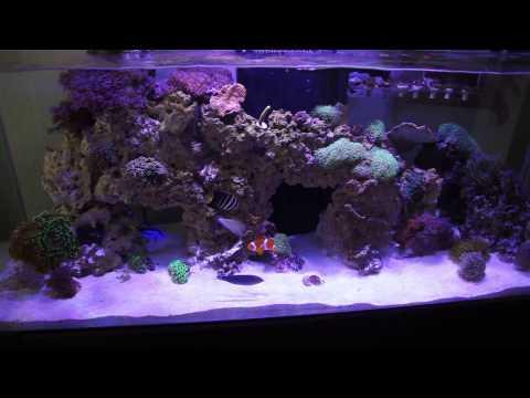 65g Custom Rimless Reef Aquarium Custom Build Complete 1
