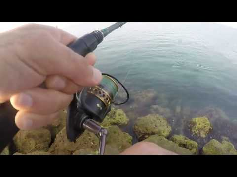 Catching bait and Fishing .. LIVE MULLET ..