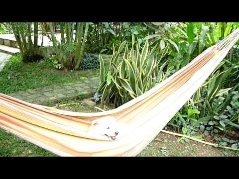 Jack in his hammock.MOV