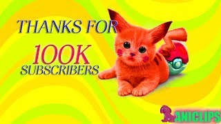 Thanks For 100k Subscribers!  - Best of Aniclips Cute Funny Animals