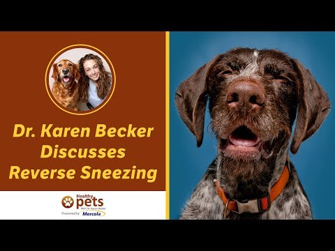 Dr. Karen Becker Discusses Reverse Sneezing
