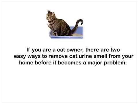 Eliminate Cat Urine Odor - Cats Spray