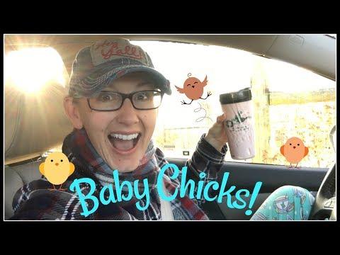 Pajamas & Baby Chicks!