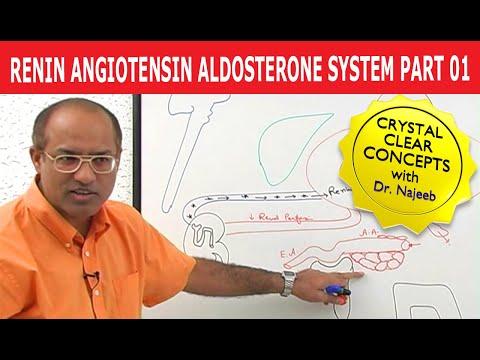 Renin Angiotensin Aldosterone System 1/7