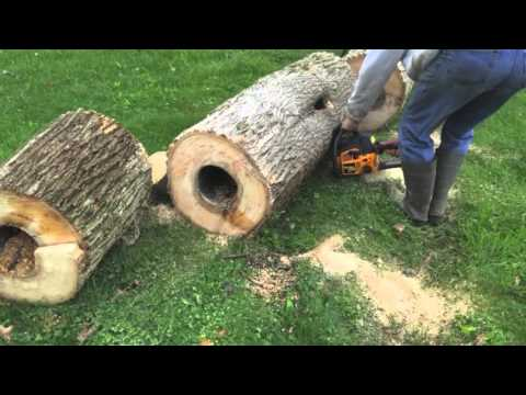 Ash Tree Removal with Bees