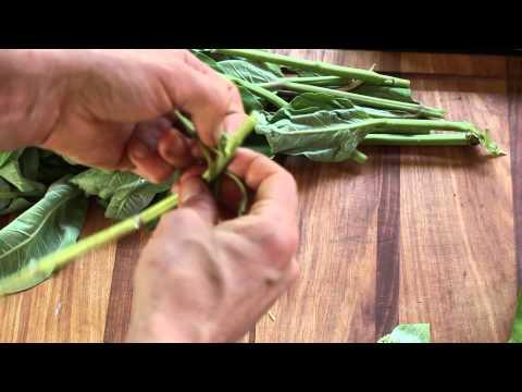 cleaning milkweed