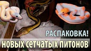Распаковка самых больших змей