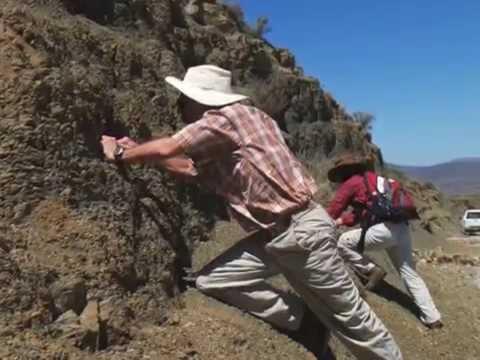 Findings Rock Long-Held Assumptions about Ancient Mass Extinction