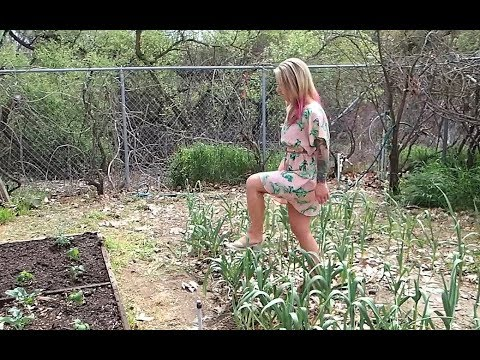 What is she doing in the Garlic Patch?  The Crouch Ranch is growing garlic!