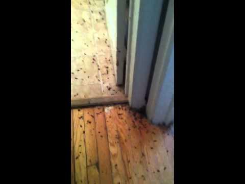 Bad roach problem