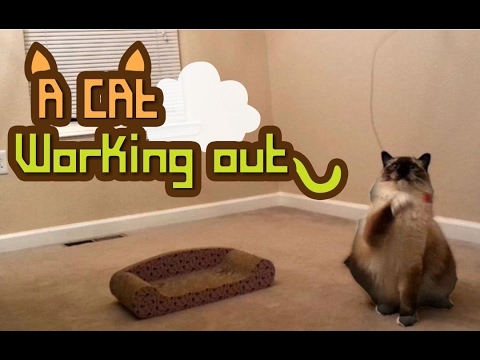 WATCH : A Cat Working Out