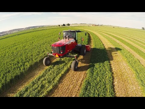 When to Cut Hay For High Quality or Tonnage