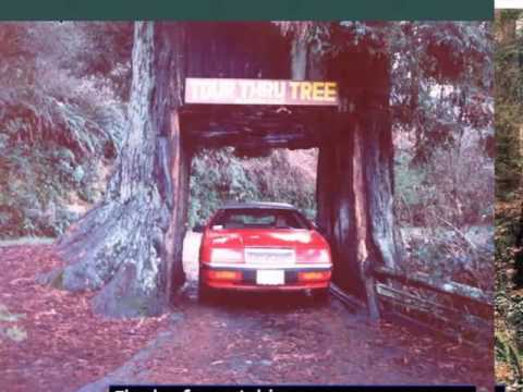 Redwood National Park |Pictures Of Most Beautiful & One Of The World Best Location To Visit
