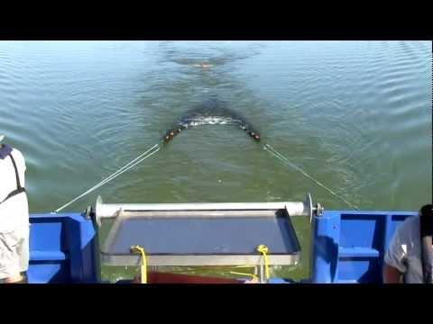 WI DNR Perch Trawling