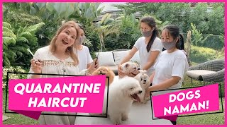 QUARANTINE HAIRCUT FOR THE DOGS! (Short Vlog) | Small Laude