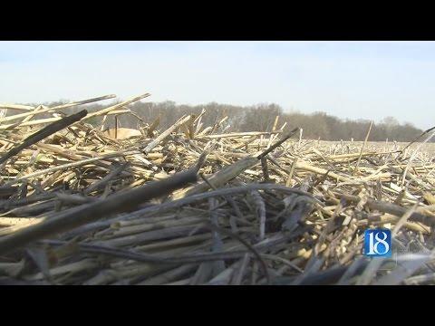 Local farmers react to unseasonably warm weather