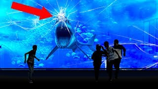 Why NO Aquarium In The WORLD Has a Great White Shark!