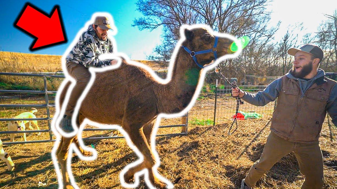 I Tried RIDING My PET CAMEL!!! (Bad Idea)