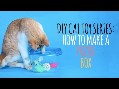DIY Cat Toys - How to Make a Puzzle Box