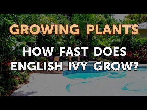 How Fast Does English Ivy Grow?