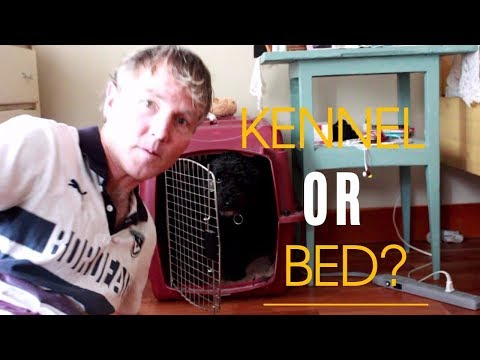 Dog in Kennel or The Bed?