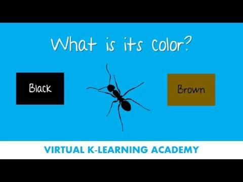Clases de ingles para principiantes - Aprende inglés escuchando (a través de preguntas)