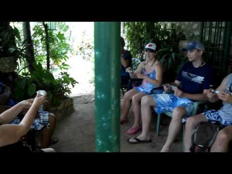 Rockland's Bird Feeding Santuary Montego Bay Jamaica by Route 876 Tours
