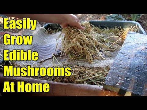 Growing Edible Gourmet Mushrooms At Home In The Garden To Build The Highest Quality Soil