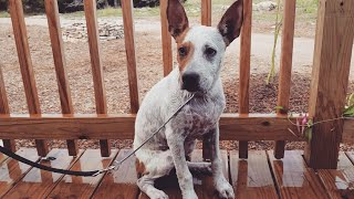 Download Giving our Foster Puppy ″Scout″ a Bath Video