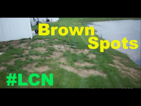 Brown Spots In The Lawn - Lawn Detective Series Part 1
