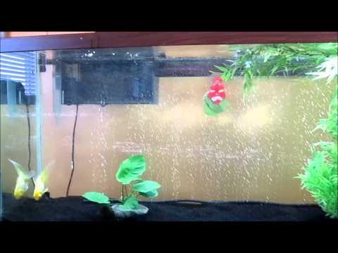 55 Gallon Goldfish Tank Setup!