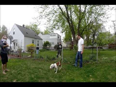 Dog Fence Fighting Behavior Modification