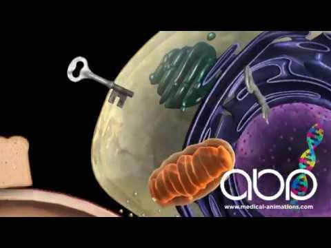 Pancreas - Hormone Production