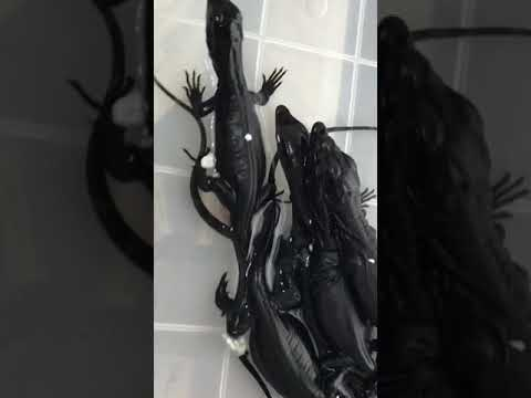 Clutch of Black Dragons
