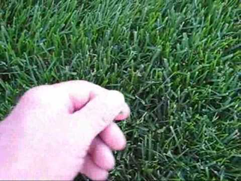 Thick Lawn Tips