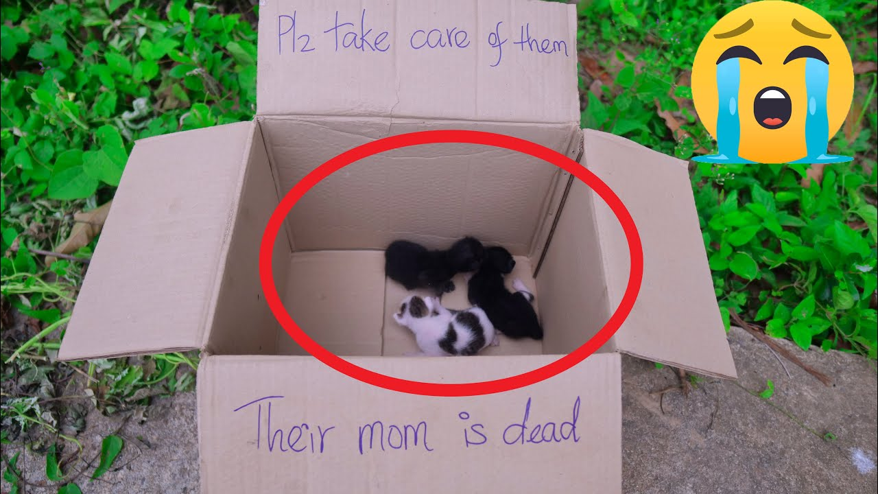 Rescue Poor Baby Cats Abandoned By Inhuman | Adopted Three Kittens Very Pitifully
