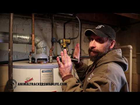 Squirrel Removal From Furnace