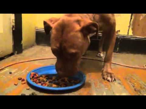 Where To Get Dog Food - Where To Get Dog Food