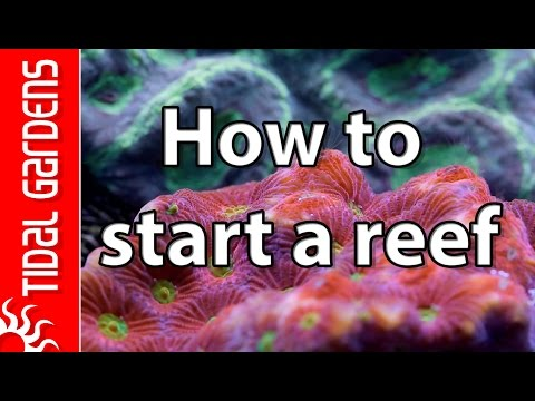 5 Tips on How to Start a Saltwater Reef Aquarium