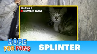 Kitten called for help from a storm drain until a man heard his little voice.