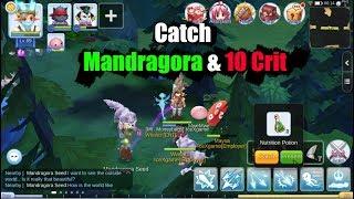 How To Catch Mandragora Pet Ragnarok Mobile