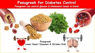 "Fenugreek can control both glucose & cholesterol levels in blood, additionally nourishes digestive system, liver and promotes respiratory health. Learn its uses, dosage, side effects and scientific evidence.  Learn more by visiting Fenugreek for Diabetes http://healthy-ojas.com/diabetes/fenugreek-diabetes.html  If you like this video, I request you to like the video by pressing thumbs-up. If you do not like this video, I request your valuable view as comment please do not press dislike.  You may also be interested in: Diabetes Herbal Gymnema - https://www.youtube.com/watch?v=H09uZg1sWVU Diabetes Herbal Ginseng - https://www.youtube.com/watch?v=H6o5Dcf_5KI Diabetes Herbal Cinnamon - https://www.youtube.com/watch?v=0lvUSftmI3Y Diabetes Herbal Bitter melon - https://www.youtube.com/watch?v=PMNumLcvInE Diabetes Herbal Aloe Vera - https://www.youtube.com/watch?v=WPxJc7BjcUs Diabetes Herbal Salacia Oblonga - https://www.youtube.com/watch?v=QkoXQIt6Y2I Diabetes Herbal Ivy gourd - https://www.youtube.com/watch?v=E6ac7XdCsX0  -~-~~-~~~-~~-~- Please watch: ""Cholesterol Screening Test does not require Fasting""  https://www.youtube.com/watch?v=pSVgD6Br3_4 -~-~~-~~~-~~-~-"