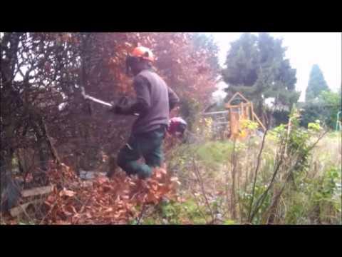 hedge cut back