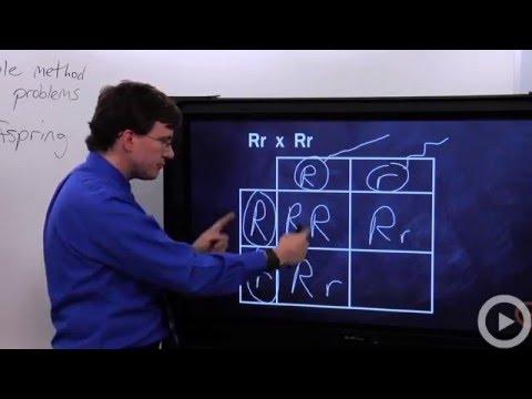 Punnett Squares(HD)