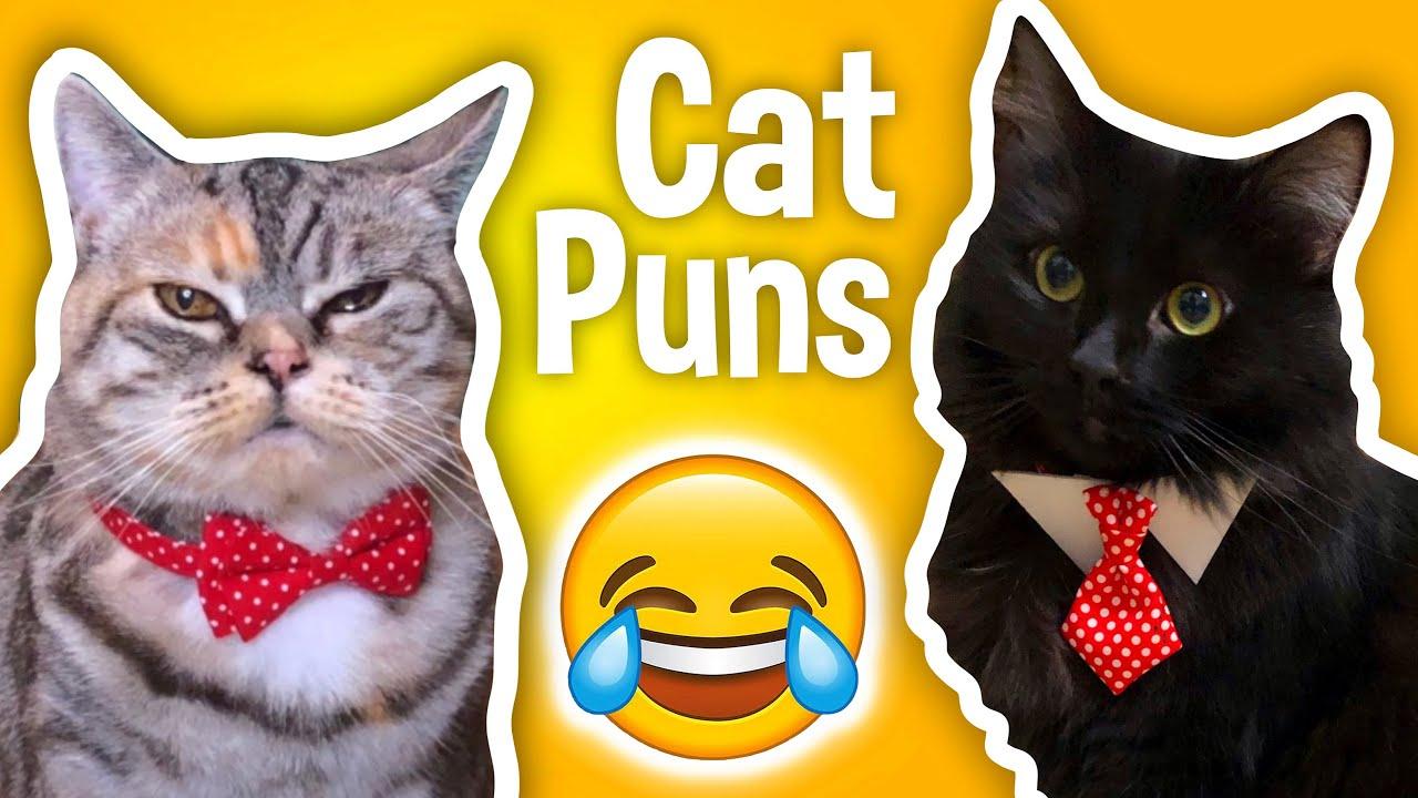 Terrible Cat Puns