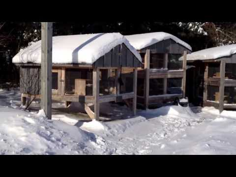 Canadian Rabbit Hutch Winter Update
