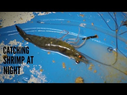 How to Catch Shrimp at Night
