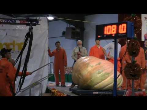 How To Hydroponics - S02E28 Hydroponic Giant Pumpkin Part 07
