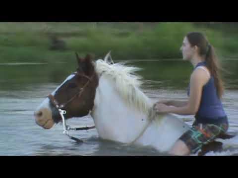Pony Swimming!