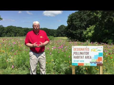 Pollinators need our help